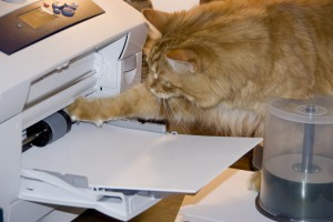 Cat and Printer