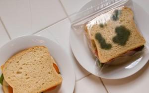 Fake Moldy Sandwich